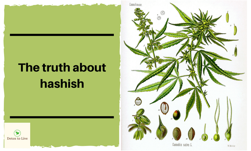 detoxtolive.com - The truth about hashish